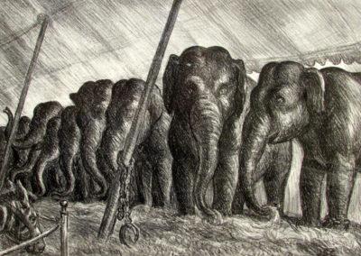 Elephants, 1936